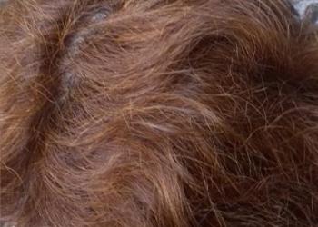 Livia dupa Henna Mandala Castaniu Auriu interior radacini
