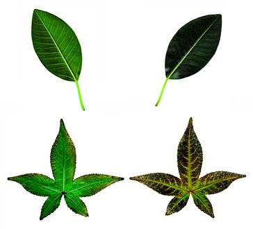 tipuri de henna