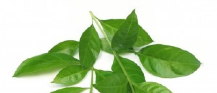 Henna Mandala contine ingrediente ayurvedice