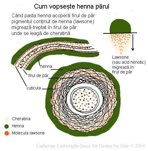 Cum vopseste henna parul